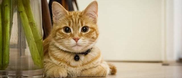 ホームセキュリティはペットを飼ってても設置可能?犬や猫がいても大丈夫?
